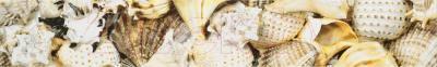 Бордюр Opoczno Nizza Мушли B (450x70)