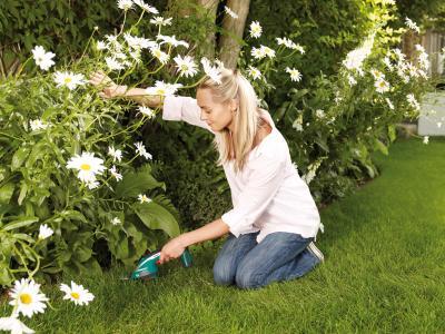 Садовые ножницы Bosch AGS 7,2 LI (0.600.856.000) - в работе