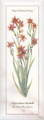 Декоративная плитка Kerama Marazzi Ноттингем Цветы Грань NT\A88\15005 (400x150)