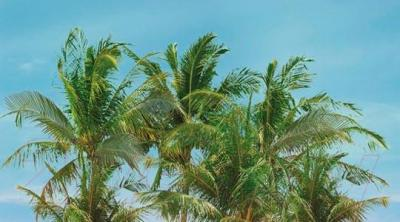 Декоративная плитка Ceradim Palm Panno A (450x250)