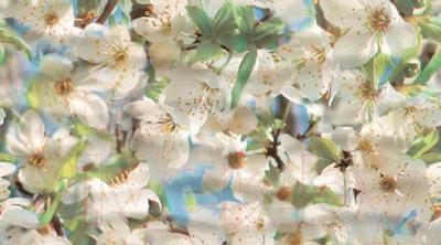 Декоративная плитка Ceradim Spring Panno A (450x250)