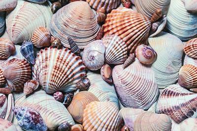 Декоративная плитка Дельта Керамика Seashore D1D138 (300x200)