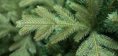 Ель новогодняя искусственная Green Trees Валерио Премиум (1.5м)