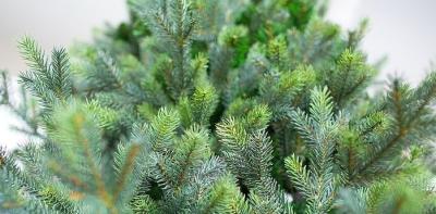 Ель искусственная Green Trees Сказочная Премиум (3м)