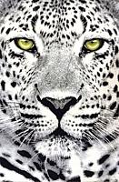 Ковер Balta Leopard 33308/150 (160x230) -