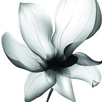 Универсальная плитка Porcelain Bobo Abloom SSN-A8 (1200x600) -