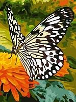 Картина по номерам Picasso Черно-белая бабочка (PC3040015) -