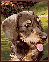 Картина по номерам Picasso Ягдтерьер (PC3040018) -
