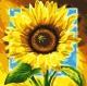Картина по номерам Picasso Подсолнух (PC4040001) -