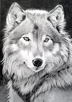 Набор алмазной вышивки Гранни Серый волк (Ag 545) -