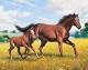 Набор алмазной вышивки Гранни Донские лошади (Ag 661) -