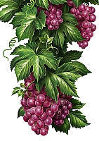 Набор алмазной вышивки Гранни Кисти винограда (Ag 865) -