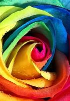 Набор алмазной вышивки Гранни Радужная роза (Ag 4615) -