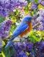 Набор алмазной вышивки Гранни Птичка (Ag 463) -