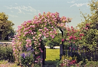 Фотообои Komar Rose Garden 8-936 (368x254) -
