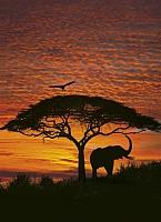 Фотообои Komar African Sunset 4-501 (194x270) -