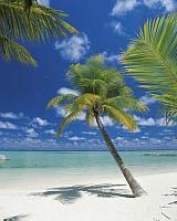 Фотообои Komar Ari Atoll 4-883 (184x254) -