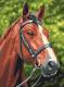 Картина по номерам Picasso Лошадь №1 (PC3040009) -