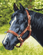Картина по номерам Picasso Лошадь №4 (PC3040012) -