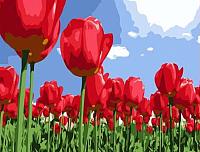 Картина по номерам Menglei Тюльпаны (MG215) -