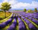 Картина по номерам Picasso Лавандовое поле (PC4050132) -