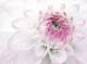 Декоративная плитка Нефрит-Керамика Панно Фреш Виолетта (750x1000, лиловый) -