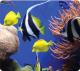 Коврик для мыши Fellowes FS-59093 (рыбки) -