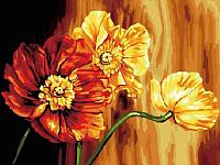 Картина по номерам Picasso Знойные цветы (PC3040065) -
