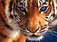Картина по номерам Picasso  Взгляд синих глаз (PC3040068) -