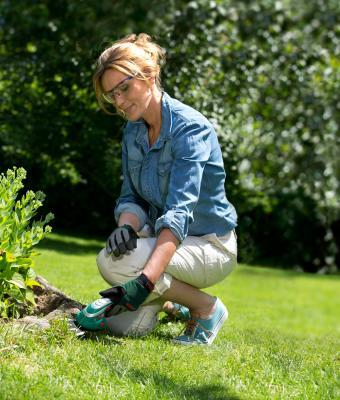 Садовые ножницы Bosch Isio (0.600.833.10G) - в работе