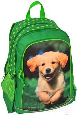 Школьный рюкзак Paso 13-081 - общий вид