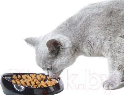 Миска для животных Savic Whisker 1 3020000 (разные цвета) - с котиком
