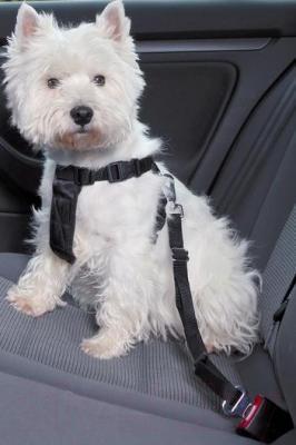 Ремень безопасности для собак Trixie 1288 (ХS, Black) - общий вид